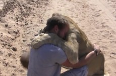 Man is reunited with lion he raised when it was a cub - YouTube [720p] thumbnail