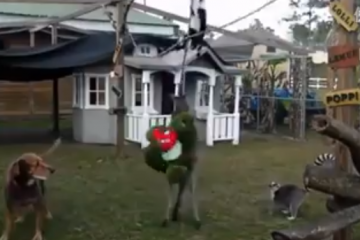 Kangaroo Kick Boxing Fun