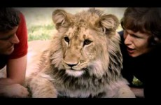 A Lion Called Christian- Full Documentary