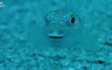 FishVideo thumbnail